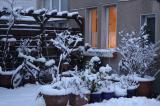 Winter auf dem Hinterhof