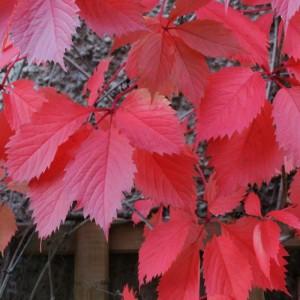Herbst_2013_Hof_4