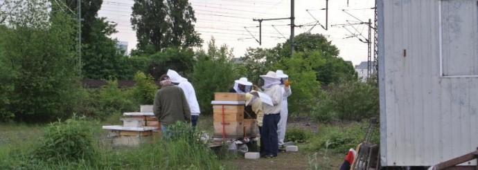 Ehrenfelder Lernbienenstand