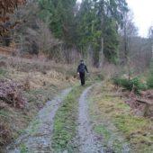 Frank im Wald.