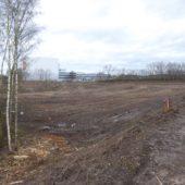 Traurig: Der ganze Wald gegenüber IKEA ist abgeholzt worden!