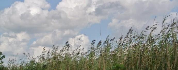 Es ist traumhaft schön auf den Nieuwkoopse Plassen (Nieuwkooper Seen)