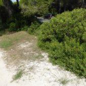 Rückweg neben der Straße am Rande des Naturschutzgebietes Albufera.