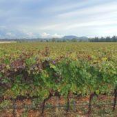 Hier kommt der gute mallorquinische Wein her.